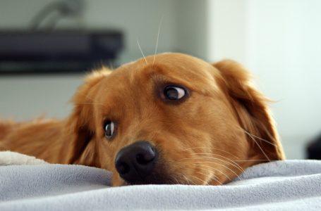 Votre chien nouvellement adopté