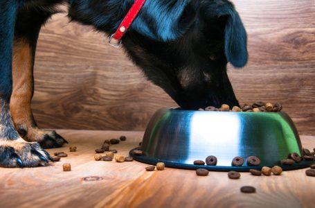 À quelle fréquence devriez-vous nourrir votre chien ?