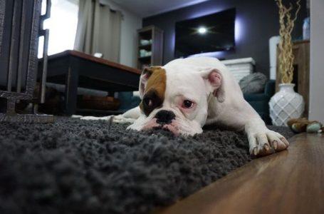 Comment se débarrasser de l'odeur de chien dans votre maison