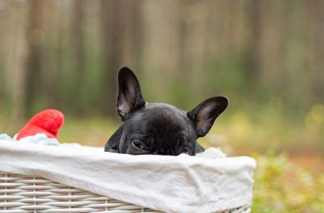 Comment choisir un panier pour votre chien
