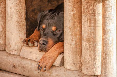 Les critères pour bien choisir une niche de chien