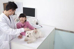 veterinaire-chien