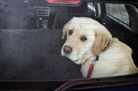 Pourquoi ne jamais laisser un chien dans une voiture