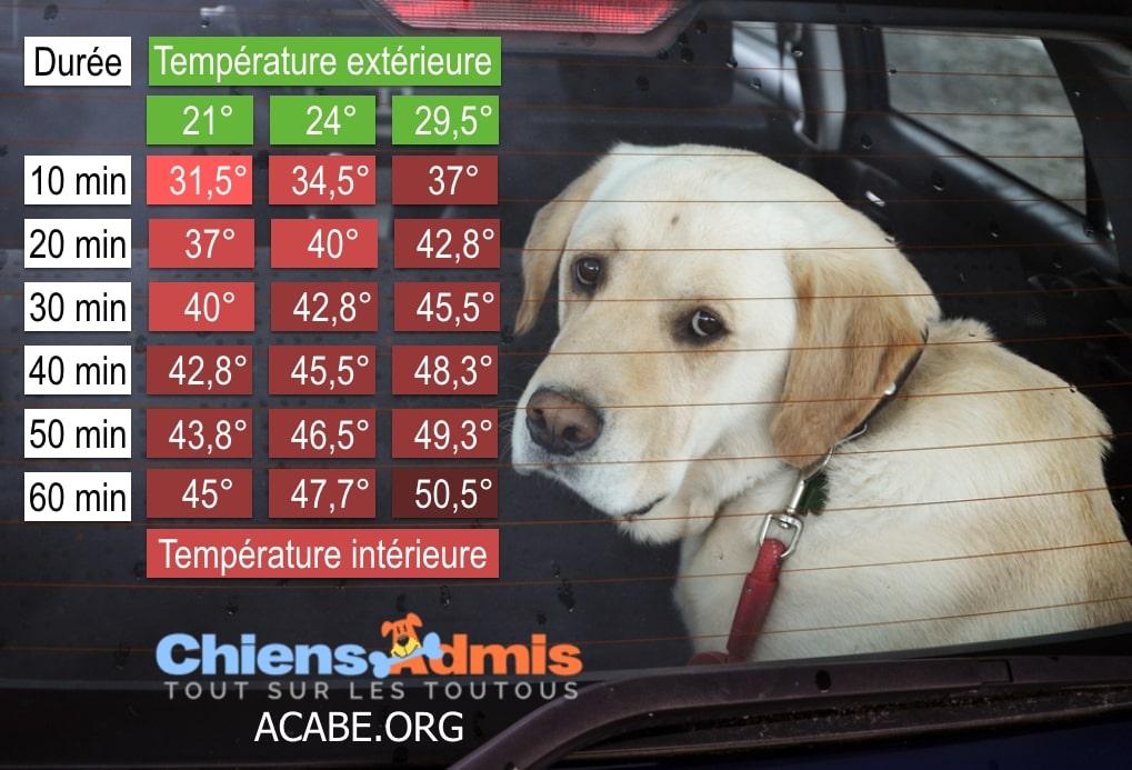 chien-voiture-chaleur