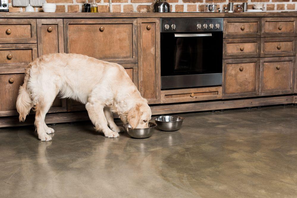 cuisiner-pour-chien