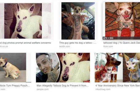 Les tatouages pour chiens, un effet de mode ?