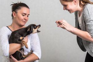 mesure-preventive-chien