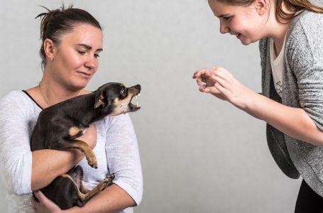 Mesures préventives à adopter vis à vis des chiens
