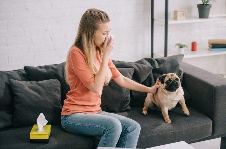 Que faire si vous êtes allergique à votre chien ?