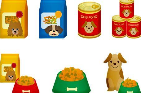 Nourrir votre chien : croquettes ou pâtée ?