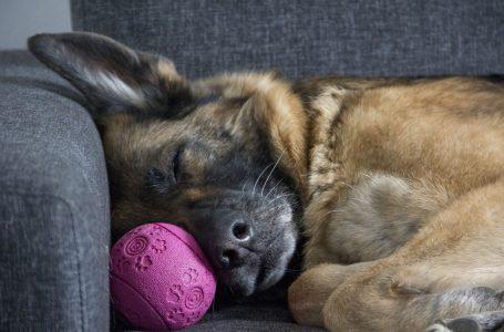 Où faire dormir votre chien?