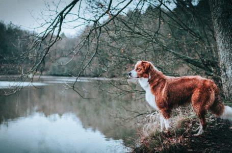 Quelle race de chien de chasse pour la maison?