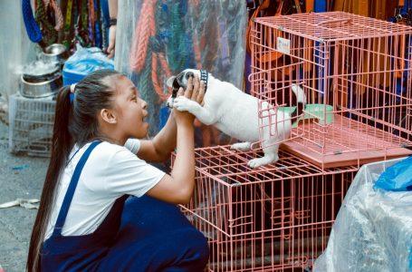 Cage pour chien : tout savoir sur cet outil canin